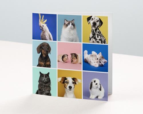 Carte de Voeux Entreprise Animaux, pele-mêle, vernis
