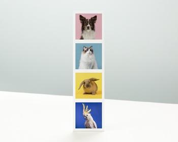 Carte de Voeux Entreprise Signet, 4 Animaux, Vernis 3D personnalisable