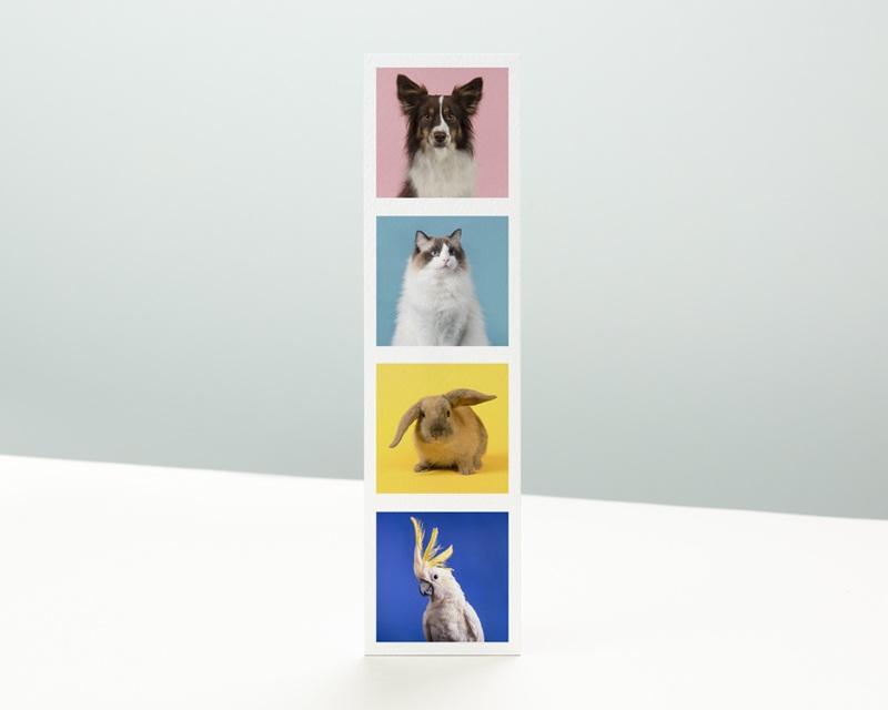 Carte de Voeux Entreprise Signet, 4 Animaux, Vernis 3D